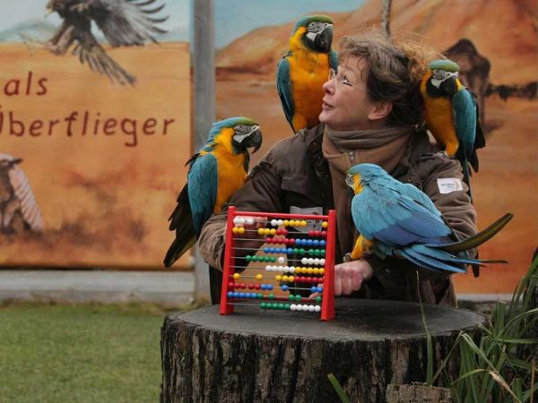 Zoo, Hannover
