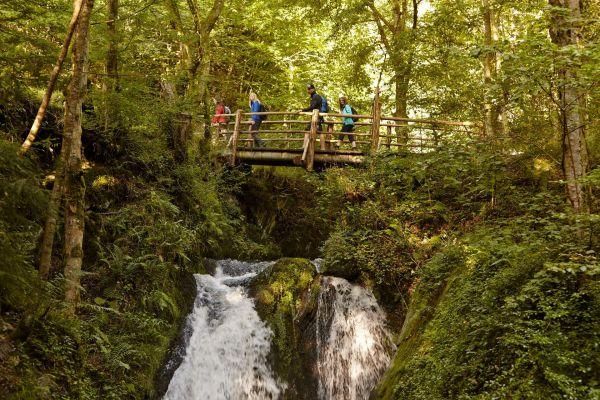 Wilder Endert / Wasserfälle, Ulmen