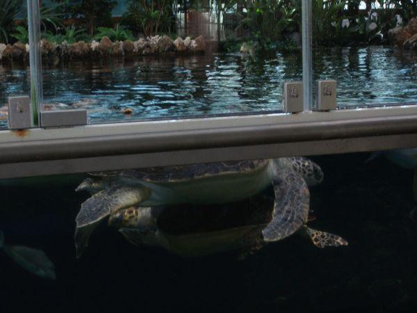 Schildkröten-Becken Stralsund