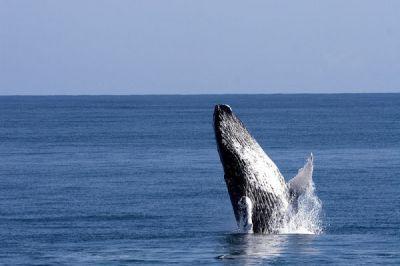 Die Walflüsterer-Aktion 2013/2014