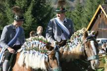 Kuh-Downhill und frisierte Pferde