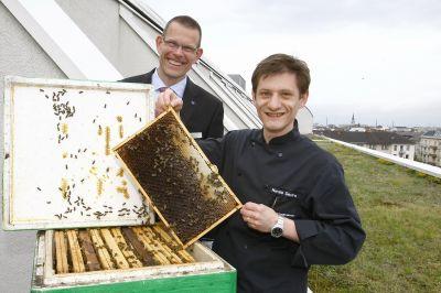 Fünf Bienenvölker sorgen für frischen Honig made by Dorint