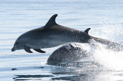 Delfine und Erholung vor Kroatien in Sicht