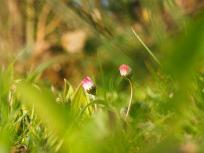 Frühlingsgrüße aus dem Bayerischen Wald