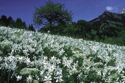 Frühlingserwachen im Genferseegebiet