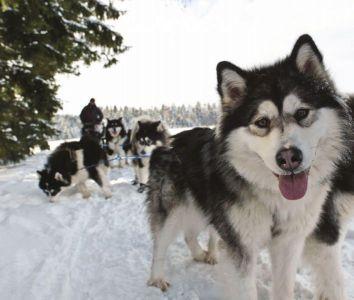 Snow Tubing und Huskytour: