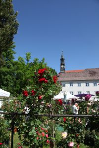 Ausflugstipp zu Pfingsten: Die Tölzer Rosen- und Gartentage