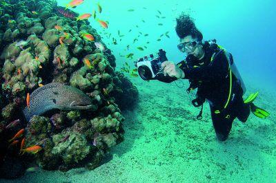 Unterwasser-Entdeckungen in den Tauchdestinationen der Mövenpick Hotels & Resorts