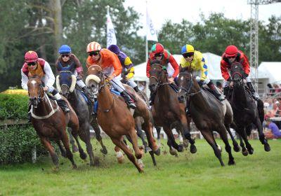 Rassige Pferde und spannende Wetten: