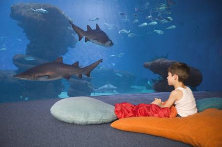 Hai-Life auf Mallorca