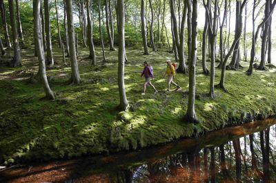 Reportage: Das Lied der Wälder