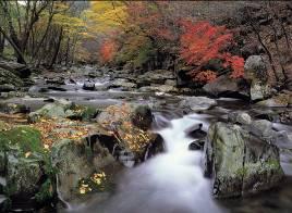 Unberührte Natur in Gangwon-do