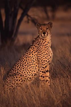 Safariträume, Traumstrände und Naturhighlights