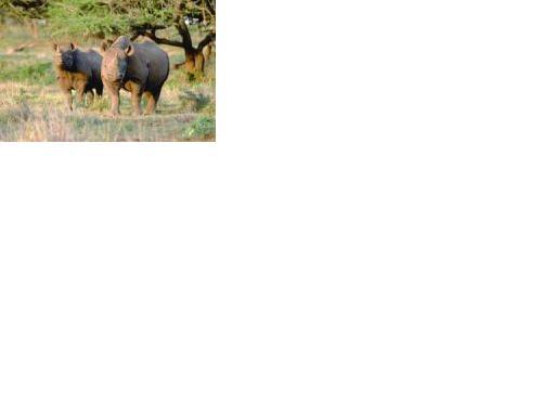 Tierisch schön: Botswana und Namibia
