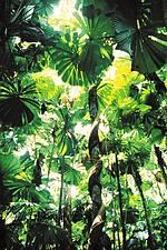 Regenwald-Tour mit Eingeborenen