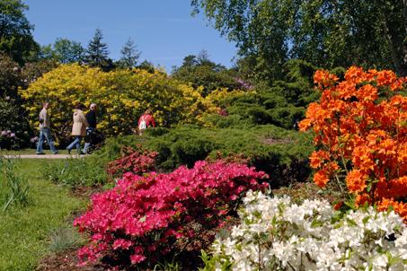 14. Mai: Rhododendronpark Graal-Müritz