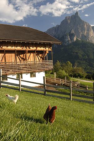 Roter Hahn spezial – Urlaub auf dem Südtiroler Biobauernhof
