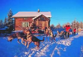 Auf schnellen Kufen und leisen Pfoten durch Lappland