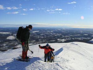Huskies fühlen sich in Schweden pudelwohl