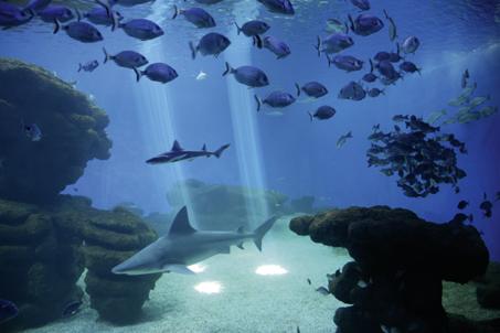 Palma Aquarium engagiert sich für Schutz von Haien