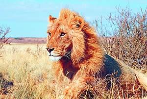 Faszination Ostafrika: Wildlife und Gipfelglück