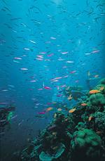 Inseln im Great Barrier Reef