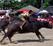 Wasserbüffelrennen in Chonburi