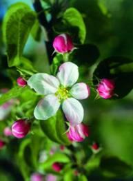 Lehrreiche Schnuppertour in Weiß-Rosa