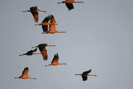 Zugvogelparadies Rügen-Bock-Region